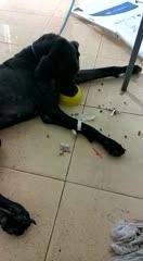 Cão abandonado em residência passa por tratamento em clínica veterinária