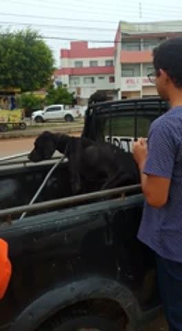 Maus tratos: bombeiros resgatam cão abandonado pelos donos há meses