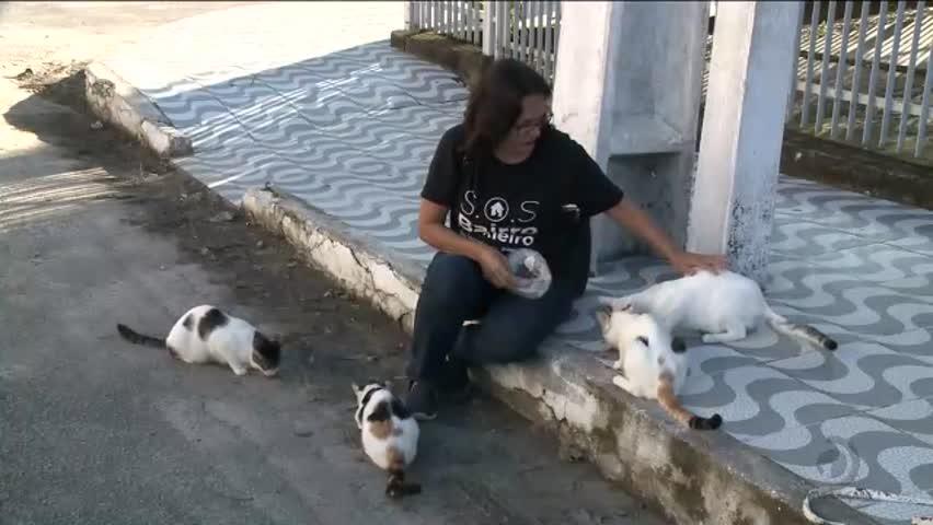 Voluntários se unem para cuidar dos animais abandonados no bairro do Pinheiro