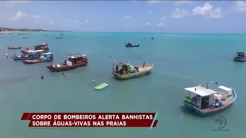 Corpo de Bombeiros alerta banhistas sobre águas-vivas nas praias de Alagoas